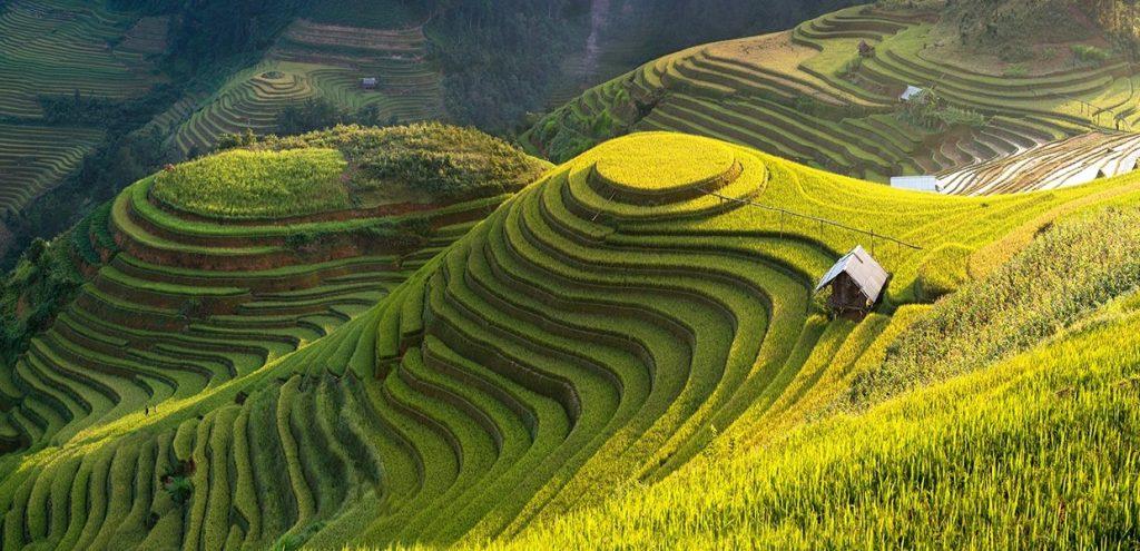 Paid Internship Vietnam